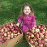 Picking apples - September 17th 2011