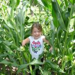 Grandpa's corn sure is getting tall - July 29th 2013